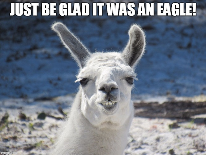 Derp | JUST BE GLAD IT WAS AN EAGLE! | image tagged in derp | made w/ Imgflip meme maker