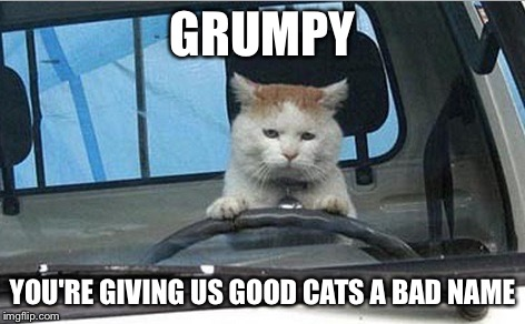 GRUMPY YOU'RE GIVING US GOOD CATS A BAD NAME | made w/ Imgflip meme maker