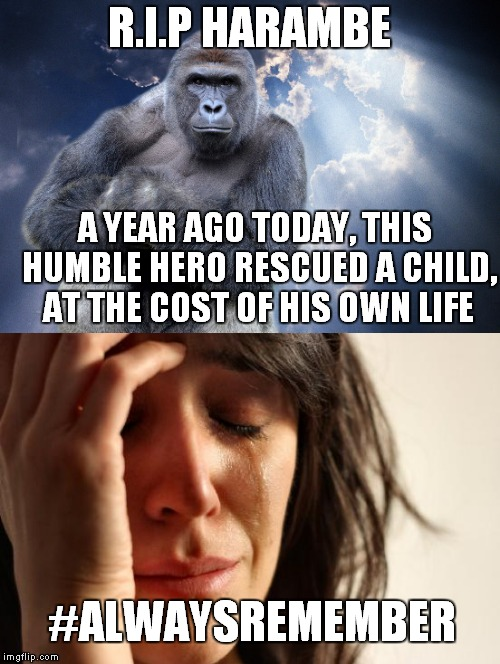 He will always be remembered. #May28 #Harambe #SpreadTheWord | R.I.P HARAMBE A YEAR AGO TODAY, THIS HUMBLE HERO RESCUED A CHILD, AT THE COST OF HIS OWN LIFE #ALWAYSREMEMBER | image tagged in harambe,memes,funny,tribute,remember,hero | made w/ Imgflip meme maker