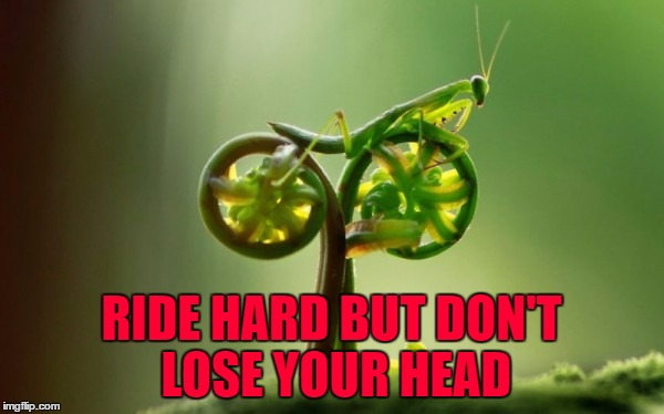 Gonna have to start riding my bike...need the exercise!!! | RIDE HARD BUT DON'T LOSE YOUR HEAD | image tagged in mantis,memes,return of mantis,funny,praying mantis,insects | made w/ Imgflip meme maker