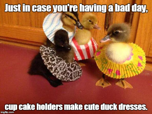 Well, then there's this. | Just in case you're having a bad day, cup cake holders make cute duck dresses. | image tagged in funny animals,ducks,dress,cute | made w/ Imgflip meme maker