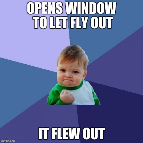 Success Kid Meme | OPENS WINDOW TO LET FLY OUT IT FLEW OUT | image tagged in memes,success kid | made w/ Imgflip meme maker