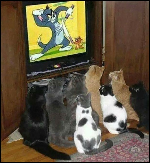 Cats Watching Tom N Jerry Blank Template Imgflip