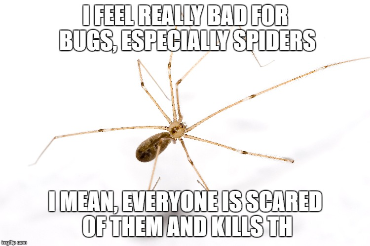 Sorry I didn't finish the meme, there was a spider on my keyboard | I FEEL REALLY BAD FOR BUGS, ESPECIALLY SPIDERS I MEAN, EVERYONE IS SCARED OF THEM AND KILLS TH | image tagged in spider,kill,scared,keyboard,bugs | made w/ Imgflip meme maker