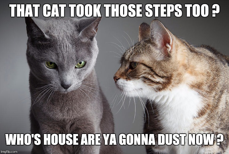 You Didn't Share ?!?! | THAT CAT TOOK THOSE STEPS TOO ? WHO'S HOUSE ARE YA GONNA DUST NOW ? | image tagged in you didn't share | made w/ Imgflip meme maker