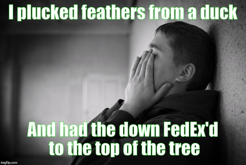 Having a hard time | I plucked feathers from a duck And had the down FedEx'd to the top of the tree | image tagged in having a hard time | made w/ Imgflip meme maker