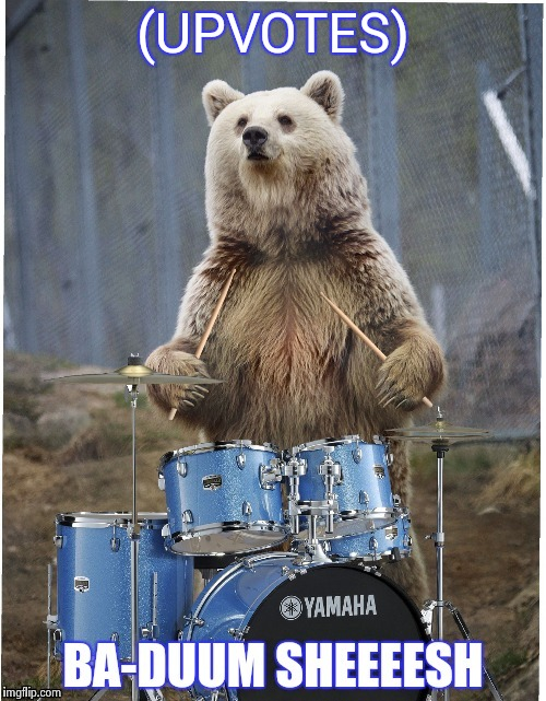 Drummer bear | (UPVOTES) | image tagged in drummer bear | made w/ Imgflip meme maker
