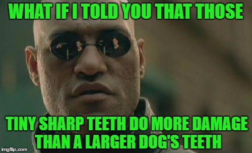 Matrix Morpheus Meme | WHAT IF I TOLD YOU THAT THOSE TINY SHARP TEETH DO MORE DAMAGE THAN A LARGER DOG'S TEETH | image tagged in memes,matrix morpheus | made w/ Imgflip meme maker
