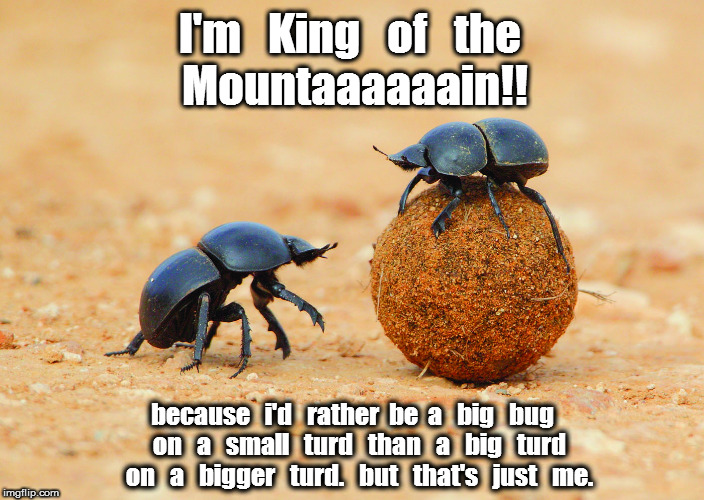 Dung Beetle King of the Mountain | I'm   King   of   the because   i'd   rather  be  a   big   bug   on   a   small   turd   than   a   big   turd   on   a   bigger   turd.    | image tagged in dung beetle | made w/ Imgflip meme maker