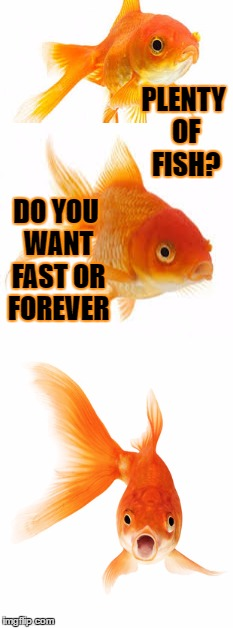 Gordy the Goldfish considers E Harmony | PLENTY OF FISH? DO YOU WANT FAST OR FOREVER | image tagged in goldfish | made w/ Imgflip meme maker