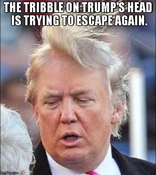 Trump Hair | THE TRIBBLE ON TRUMP'S HEAD IS TRYING TO ESCAPE AGAIN. | image tagged in trump hair | made w/ Imgflip meme maker