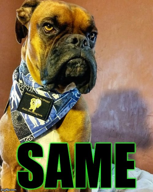 Grumpy Dog | SAME | image tagged in grumpy dog | made w/ Imgflip meme maker