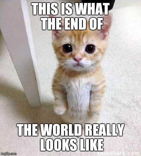 Cute Cat Meme | THIS IS WHAT THE END OF THE WORLD REALLY LOOKS LIKE | image tagged in memes,cute cat | made w/ Imgflip meme maker