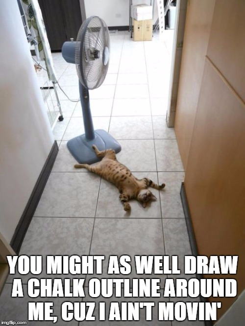Flat Cat | YOU MIGHT AS WELL DRAW A CHALK OUTLINE AROUND ME, CUZ I AIN'T MOVIN' | image tagged in cats,funny cats,cool cats | made w/ Imgflip meme maker