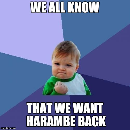 Success Kid Meme | WE ALL KNOW THAT WE WANT HARAMBE BACK | image tagged in memes,success kid | made w/ Imgflip meme maker