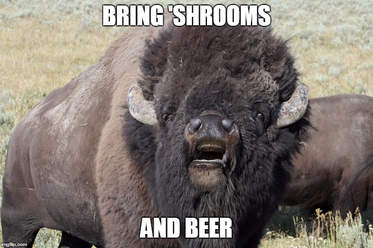 BRING 'SHROOMS AND BEER | made w/ Imgflip meme maker