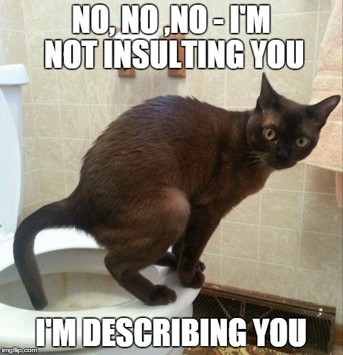 NO, NO ,NO - I'M NOT INSULTING YOU I'M DESCRIBING YOU | made w/ Imgflip meme maker
