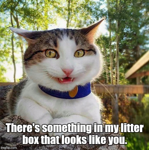Smiling Cat | There's something in my litter box that looks like you. | image tagged in smiling cat | made w/ Imgflip meme maker