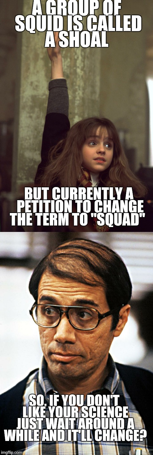 "A GROUP OF SQUID IS CALLED A SHOAL BUT CURRENTLY A PETITION TO CHANGE THE TERM TO ""SQUAD"" SO, IF YOU DON'T LIKE YOUR SCIENCE JUST WAIT AROUN 