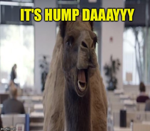 IT'S HUMP DAAAYYY | made w/ Imgflip meme maker