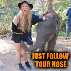 JUST FOLLOW YOUR NOSE | made w/ Imgflip meme maker