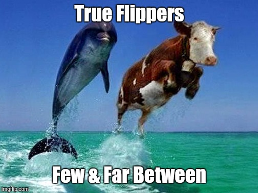 IMGFLIP, Flip, Flip, Flip, Flip | True Flippers Few & Far Between | image tagged in memes | made w/ Imgflip meme maker