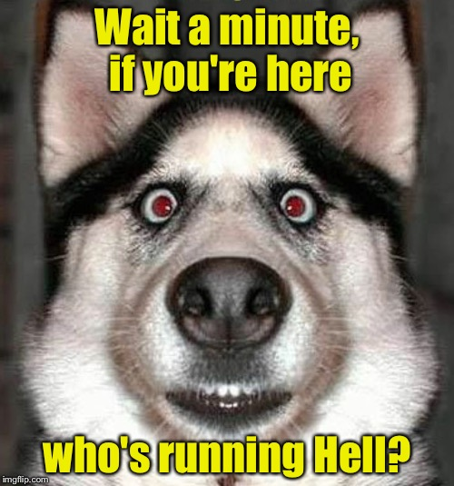 You can't fool dogs. They can sense it.  | Wait a minute, if you're here who's running Hell? | image tagged in surprise dog,the devil | made w/ Imgflip meme maker