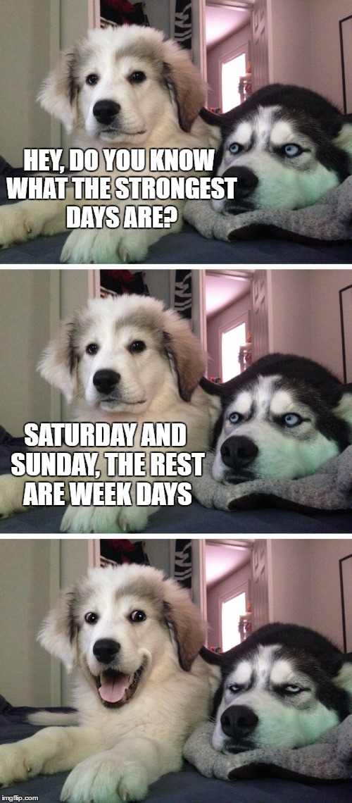 Bad pun dogs | HEY, DO YOU KNOW WHAT THE STRONGEST DAYS ARE? SATURDAY AND SUNDAY, THE REST ARE WEEK DAYS | image tagged in bad pun dogs | made w/ Imgflip meme maker