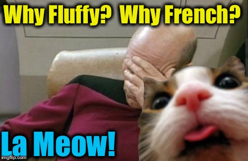 Why Fluffy?  Why French? La Meow! | made w/ Imgflip meme maker