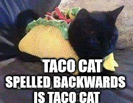 Taco Cat spelled backwards is...... | TACO CAT SPELLED BACKWARDS IS TACO CAT | image tagged in taco cat - tac ocat,taco cat meme,meme a bow wow meow,can you see the light,anagram solver,wordsmith dot org | made w/ Imgflip meme maker