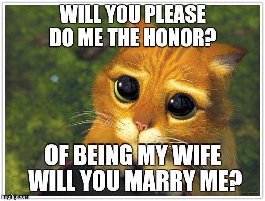 Shrek Cat | WILL YOU PLEASE DO ME THE HONOR? OF BEING MY WIFE WILL YOU MARRY ME? | image tagged in memes,shrek cat | made w/ Imgflip meme maker