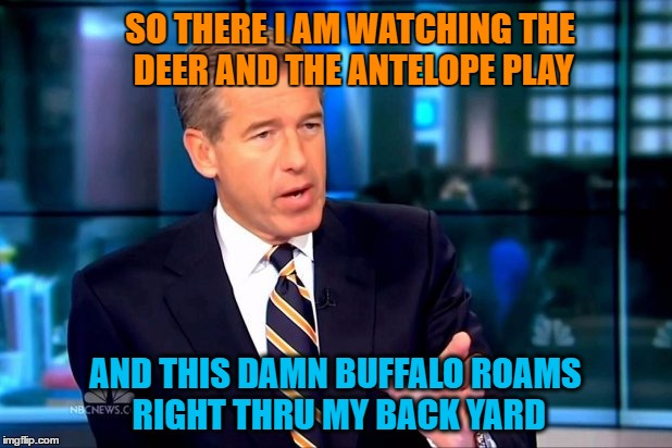 Buffalo Wild Yard - Thanks for the inspiration LizzyAnimation | SO THERE I AM WATCHING THE DEER AND THE ANTELOPE PLAY AND THIS DAMN BUFFALO ROAMS RIGHT THRU MY BACK YARD | image tagged in memes,brian williams was there,buffalo,deer,antelope,playing | made w/ Imgflip meme maker