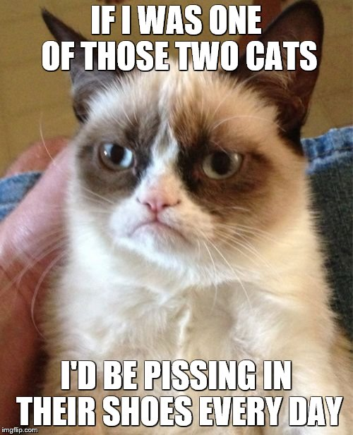 Grumpy Cat Meme | IF I WAS ONE OF THOSE TWO CATS I'D BE PISSING IN THEIR SHOES EVERY DAY | image tagged in memes,grumpy cat | made w/ Imgflip meme maker