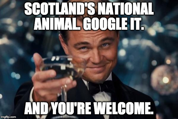 Seriously, google it. | SCOTLAND'S NATIONAL ANIMAL. GOOGLE IT. AND YOU'RE WELCOME. | image tagged in memes,leonardo dicaprio cheers,google,scotland,the new day | made w/ Imgflip meme maker