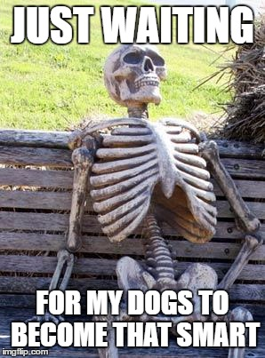 Waiting Skeleton Meme | JUST WAITING FOR MY DOGS TO BECOME THAT SMART | image tagged in memes,waiting skeleton | made w/ Imgflip meme maker
