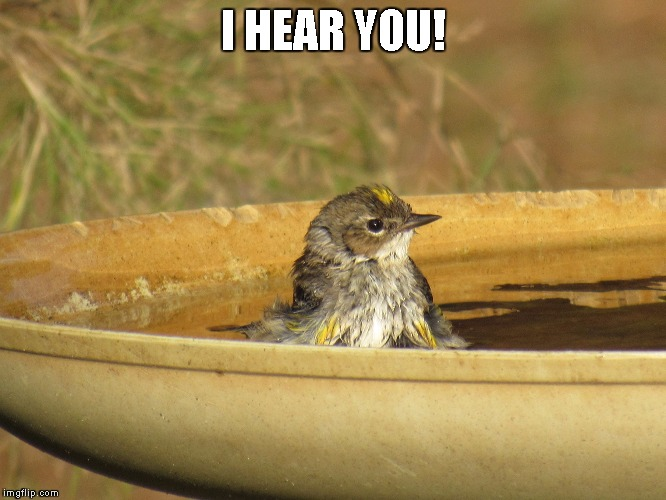 Bird Bath | I HEAR YOU! | image tagged in bird bath | made w/ Imgflip meme maker