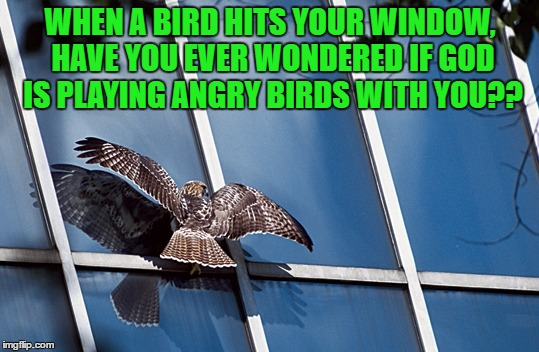 WHEN A BIRD HITS YOUR WINDOW, HAVE YOU EVER WONDERED IF GOD IS PLAYING ANGRY BIRDS WITH YOU?? | image tagged in bird,window,god,angry birds,funny,funny memes | made w/ Imgflip meme maker