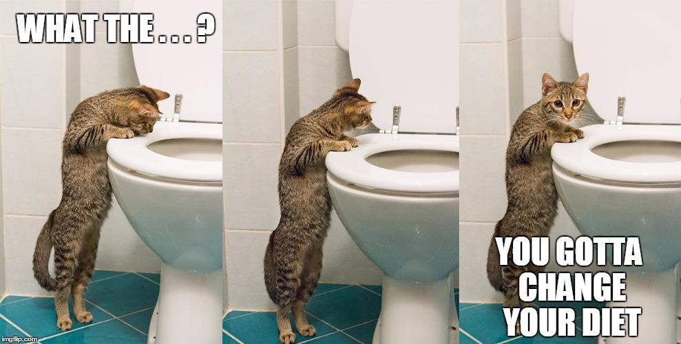 and you say the litter box is gross? | WHAT THE . . . ? YOU GOTTA CHANGE YOUR DIET | image tagged in cat looking in toilet,memes,cats,toilet,toilet humor | made w/ Imgflip meme maker