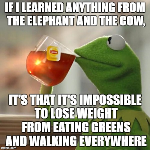But Thats None Of My Business Meme | IF I LEARNED ANYTHING FROM THE ELEPHANT AND THE COW, IT'S THAT IT'S IMPOSSIBLE TO LOSE WEIGHT FROM EATING GREENS AND WALKING EVERYWHERE | image tagged in memes,but thats none of my business,kermit the frog | made w/ Imgflip meme maker