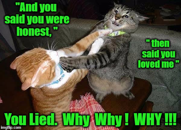 "Two cats fighting for real | ""And you said you were honest, "" You Lied.  Why  Why !  WHY !!! "" then said you loved me "" 