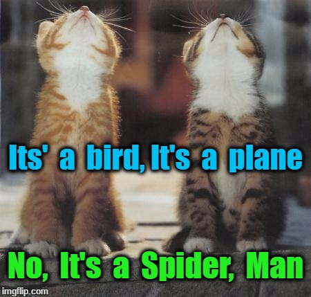 cats looking up | Its'  a  bird, It's  a  plane No,  It's  a  Spider,  Man | image tagged in cats looking up | made w/ Imgflip meme maker