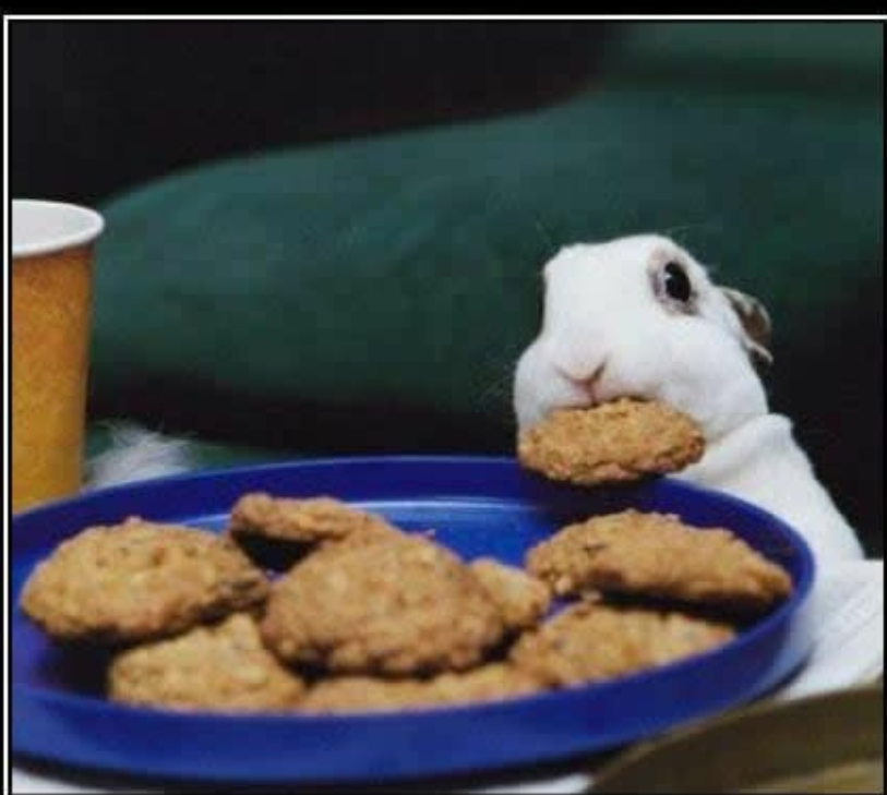 Bunny eating cookie Meme Template