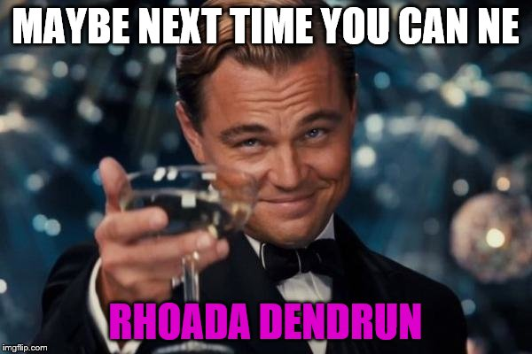 Leonardo Dicaprio Cheers Meme | MAYBE NEXT TIME YOU CAN NE RHOADA DENDRUN | image tagged in memes,leonardo dicaprio cheers | made w/ Imgflip meme maker
