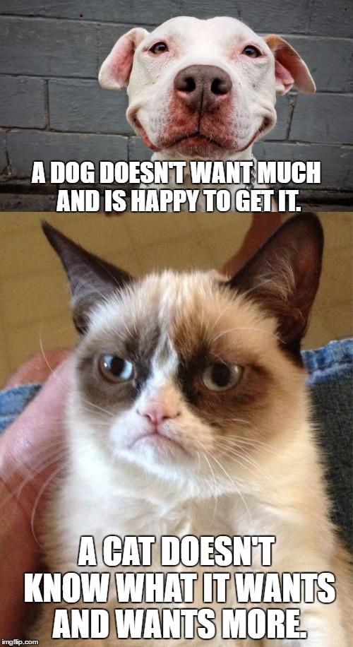 Funny Dog Meme Smile : Smiling dog imgflip