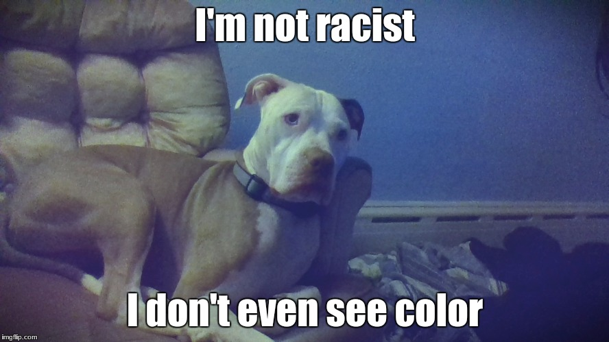 Buddy isn't racist! | I'm not racist I don't even see color | image tagged in buddy,my dog,puppy | made w/ Imgflip meme maker