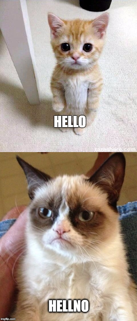 HELLO HELLNO | image tagged in grumpy cat | made w/ Imgflip meme maker