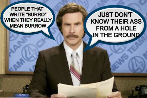 "Everybody is a Grammar Nazi these days | PEOPLE THAT WRITE ""BURRO"" WHEN THEY REALLY MEAN BURROW JUST DON'T KNOW THEIR ASS FROM A HOLE IN THE GROUND 