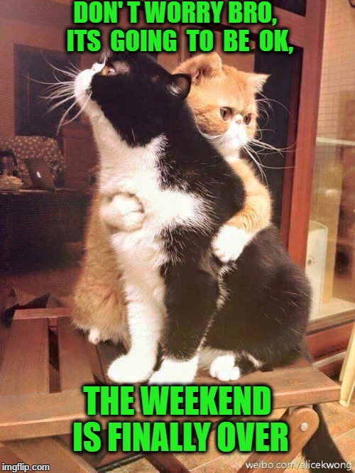cats hugging | DON' T WORRY BRO,  ITS  GOING  TO  BE  OK, THE WEEKEND IS FINALLY OVER | image tagged in cats hugging | made w/ Imgflip meme maker