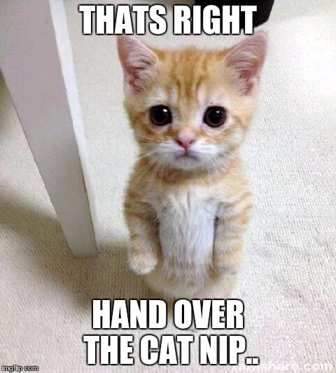 Cute Cat |  THATS RIGHT; HAND OVER THE CAT NIP.. | image tagged in memes,cute cat | made w/ Imgflip meme maker