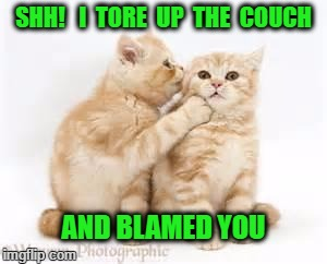 SHH!   I  TORE  UP  THE  COUCH AND BLAMED YOU | image tagged in cats | made w/ Imgflip meme maker
